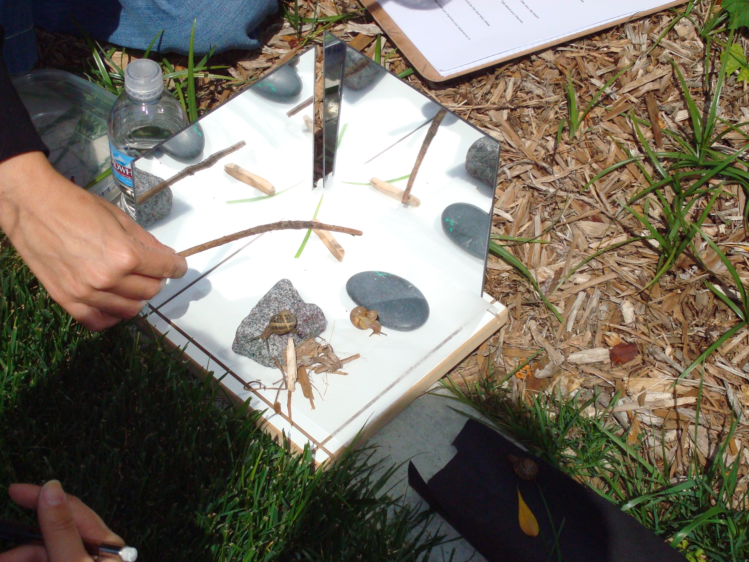 Science Inquiry Process Snails